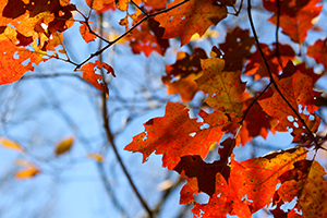 Canon_7D_Mark_II_Experience-leaves