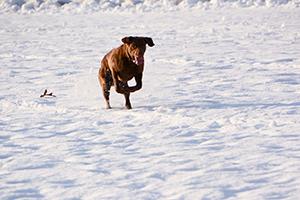 Nikon-D7100-Experience-Dog