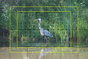 Canon 5DS / 5DS R Experience - AF Heron