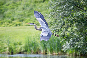 Canon 5DS / 5DS R Experience - Heron