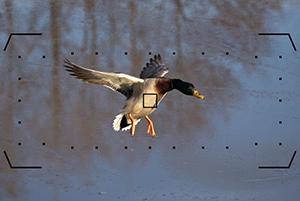 Nikon-D500-Viewfinder-AF-Dynamic-153pt